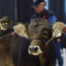 All Other Breeds - Farmfair International