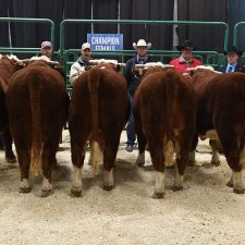 Bull Pen Show - Farmfair International