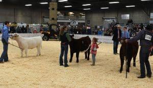 Shorthorn - Purebred Beef Shows Farmfair International