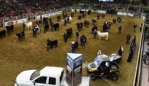 Alberta Supreme Show Presented by RAM