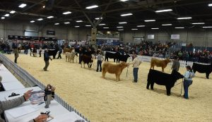 Prospect Steer and Heifer Show - Farmfair International