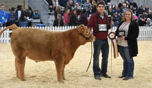 Prospect Steer and Heifer Show - Farmfair International