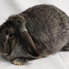 Rabbit Show - Farmfair International