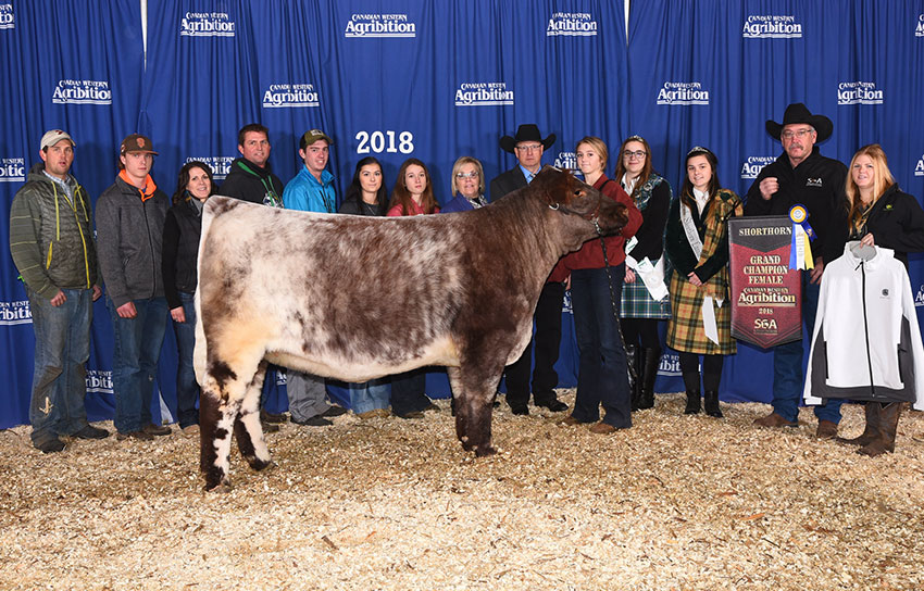 Buda and Golden Oak Livestock - Champion of the World 2019