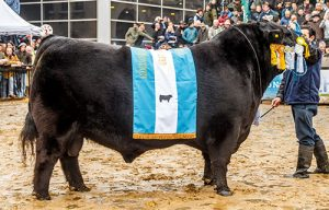 Cabana Tres Marias - Angus - Champion of the World 2019