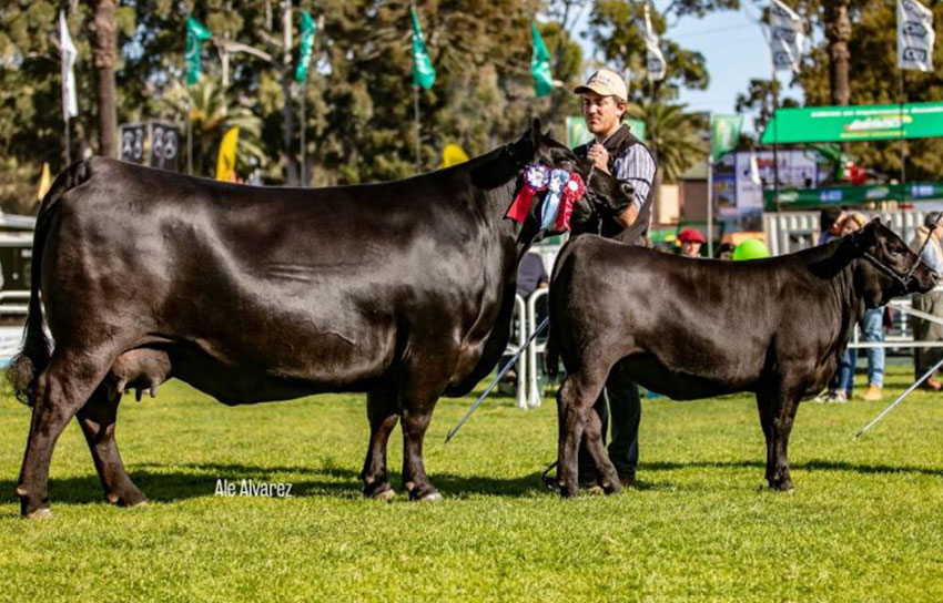 La Santina - Angus - Champion of the World 2019