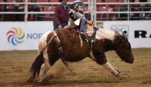 Rank Mini Pony Canadian Classic - Farmfair International