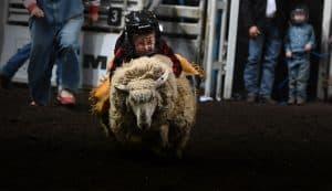 Mutton Busting - Farmfair International