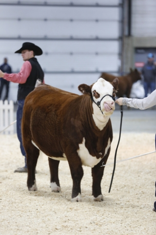 Hereford Show