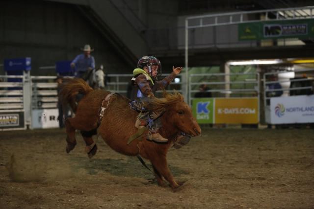 Rank Mini Pony Canadian Classic