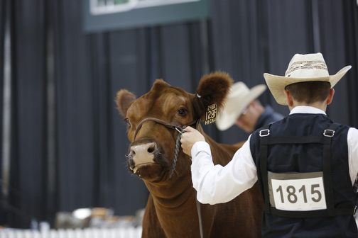 Red Angus Show
