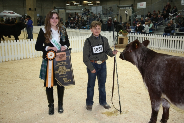 National Shorthorn Show