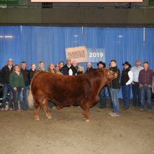 Grand Champion Bull - Greenwood Limousin