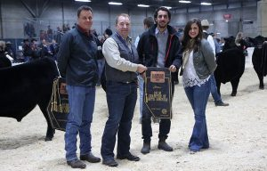 Angus - South America - Champion Of The World - 2018